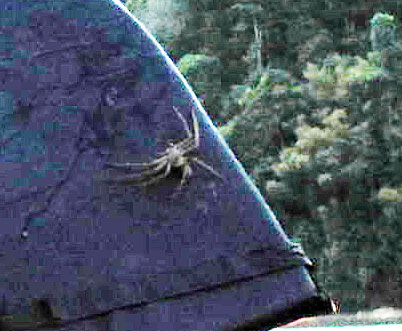 spiderwest2